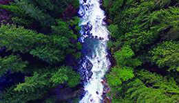Overhead view of a river running through a forest